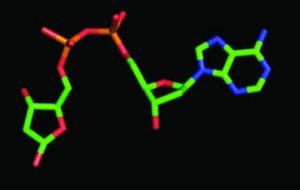 New cell signalling molecule - News