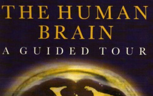 Button link to website Louise Taylor on The Human Brain A Guided Tour