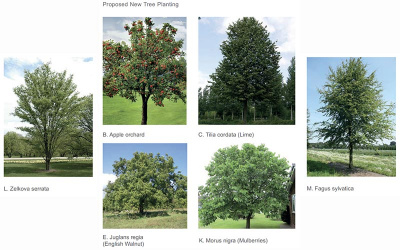 Proposed new trees